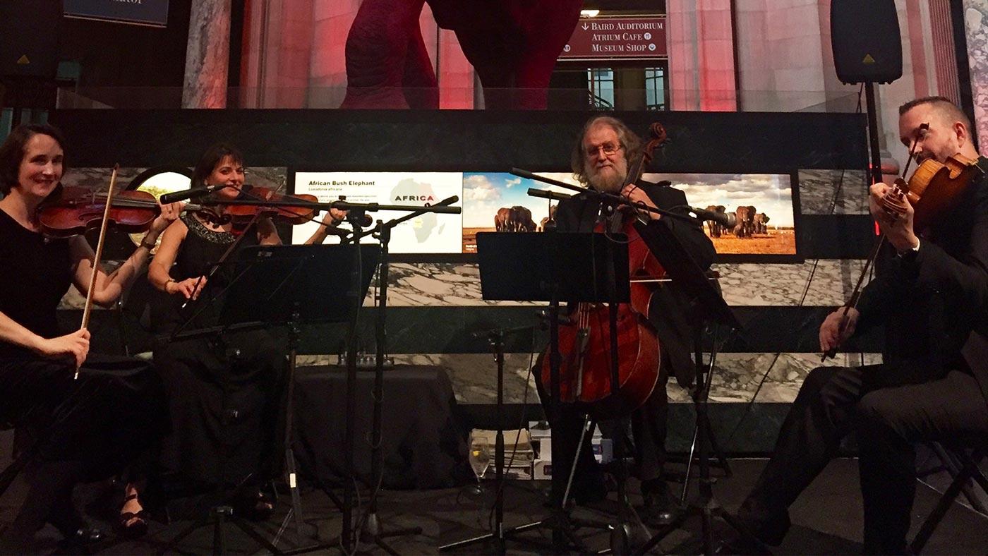 String Along - string quartet - photo